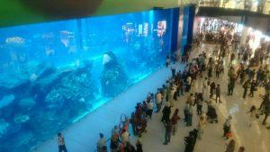 akvarijum dubai