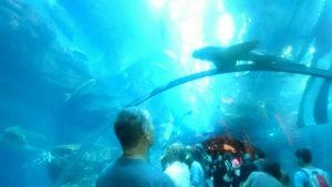 akvarijum dubai morski svet