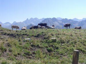 Oberstdorf alpi krave