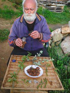 propolis ceda pejic vlasine