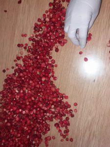 sumske jagode ubrane