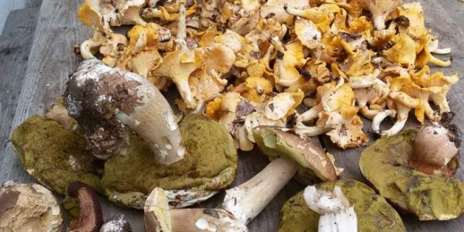 Dani gljiva u Vlasotincu od 28. do 30.septembra