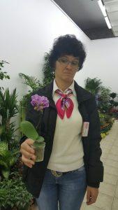 cvece-mini-orhideja