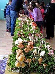 gljive-gadzin-han-skola