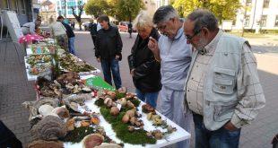 """Bratstvo i jedinstvo na """"Danima gljiva"""" u Vlasotincu"""