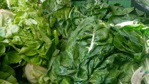 povrce salata blitva