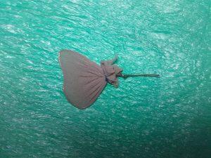 leptiri postupak unihop i žica