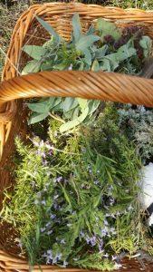 lekovito bilje korpa pletena