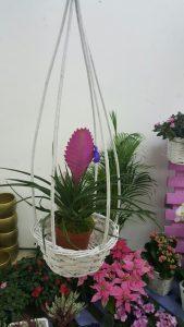 cvece-tulanzija-cvet