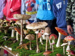 gljive-edukacija