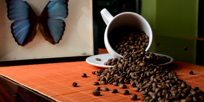 Put zrna kafe od plantaže do kesice