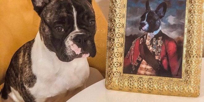 Portreti kućnih ljubimaca na originalan način