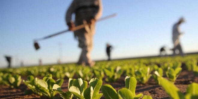 Poljoprivrednici će plasirati proizvode na veliko uz pomoć sajta Agro ponuda