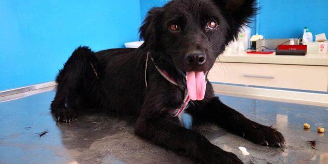 Licitacijom do pomoći niškim napuštenim psima i mačkama