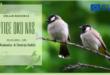 """Obeležavanje Međunarodnog dana divljih vrsta – Radionica """"Ptice oko nas"""""""