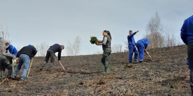 """Vlasinka i JP """"Srbijašume"""" posadili 500 stabala smrče u Leskovoj bari"""