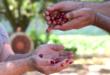 Sve što niste znali o kafi sorte Arabica